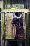 Wooden Bird House with Spider Web Royalty Free Stock Photo
