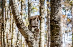 Wooden bird house on the tree in the woods Stock Image