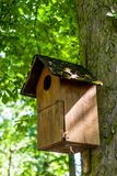 Wooden Bird house. In an old tree on a sunny afternoon with green leafs in the background stock photos