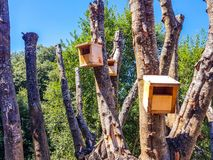 Wooden bird houses located in a newly pruned tree. Nest, home, natural, nature, animal, background, roof, hole, box, construction, bird-box, season, nobody stock photography