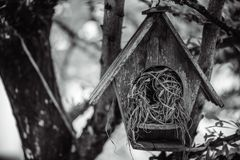 Wooden Bird Nest House On Tree. Living Space For Lovely Bird royalty free stock photo