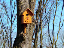 Wooden birdhouse feeder for birds on a tree Royalty Free Stock Photo