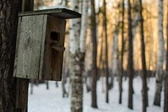Wooden birdhouse handing on the tree at winter stock images