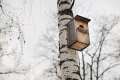 Wooden Birdhouse hang on birch tree Stock Photo