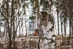 Wooden Birdhouse hang on birch tree. Green fungus on a tree Stock Image