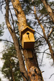 Wooden Birdhouse hang on a pine tree Royalty Free Stock Photos