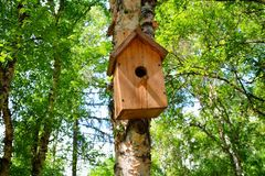 Wooden birdhouse hanging on a birch tree background in the city park Stock Photo