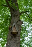 Wooden birdhouse hanging on a tree stock photography