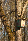Wooden birdhouse hangs on the tree trunk.  Royalty Free Stock Image