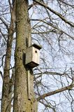 Wooden Birdhouse on Tree Stock Images
