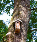 Wooden birdhouse on the tree Royalty Free Stock Image