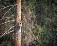 Wooden birdhouse on a tree. Stock Image