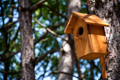 Wooden birdhouse on a tree in the forest and park Stock Images