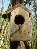 Wooden birdhouse on tree in sunny forest. Handmade wooden birdhouse in spring forest Stock Photography