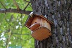 Wooden birdhouse on the tree trunk Stock Photos
