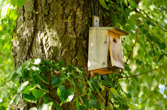 Wooden birdhouses. On a tree in the forest Stock Image