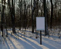 Wooden blank sign in fores. In snow Stock Photography