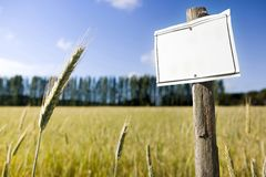Wooden blank sign indicating against a corn field - image with copy space stock images