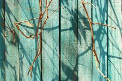 Wooden blue painted fence with dry branches and shadows as wood texture background. Wooden blue painted fence with dry bare branches and shadows as wood texture Stock Images