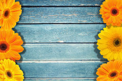 Wooden blue texture and flowers royalty free stock photo