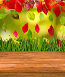 Wooden board on autumn leaves background. Image of wooden board on autumn leaves background Stock Images