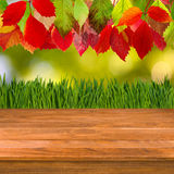 Wooden board on autumn leaves background. Image of wooden board on autumn leaves background Royalty Free Stock Photography