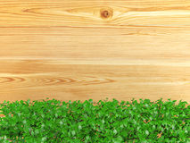 Wooden board background covered with ornamental bush plant with copy space Royalty Free Stock Photography