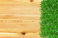 Wooden board background covered with ornamental bush plant with copy space Stock Images