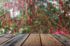 Wooden board. Blur big tree and wooden board Stock Images