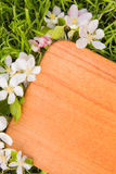 Wooden board and  branch of apple tree flower Stock Photography
