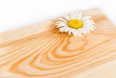 Wooden board and camomile Stock Images