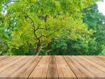 Wooden board empty table in front of forest background. Perspect Stock Image