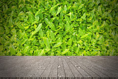 Wooden board empty table in front of tea leaves background for d Royalty Free Stock Images