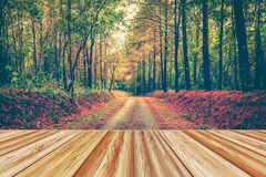 Wooden board empty table top on autumn forest scenery with vibra Stock Photo