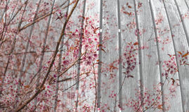Wooden board with flower on double exposure technical Royalty Free Stock Photos