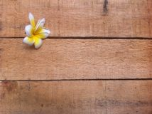 Wooden Board and Frangipani or Plank for Background of your announcement, quote, information or other text Royalty Free Stock Images