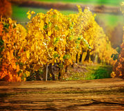 Wooden board in front of autumnal vineyard Stock Images