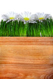 Wooden Board Grass and Flowers Royalty Free Stock Image