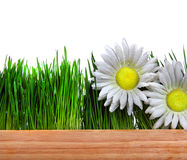 Wooden Board Grass and Flowers Royalty Free Stock Photography