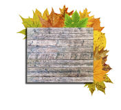 Wooden board and lot autumn leaf around isolated on white Royalty Free Stock Image