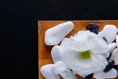 A wooden board with pebbles and a white flower bud for a spa treatment. On a black background. Close-up. stock images