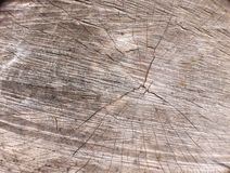 Wooden board. Piece of wooden board ready to burn Stock Photography