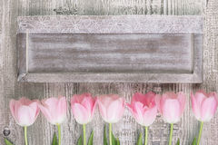 Wooden board with a row of pink tulips Royalty Free Stock Photo