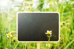 Wooden board signs on small flowers background with warm light t Stock Photography