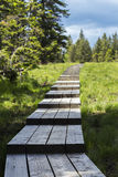 Wooden board way leading somewhere. In the nature Royalty Free Stock Photography