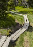 Wooden board way leading somewhere. In the nature Royalty Free Stock Images
