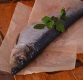 Whole salted fish herring seafood Royalty Free Stock Photo