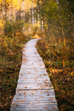 Wooden boarding path way pathway in autumn forest Stock Photo