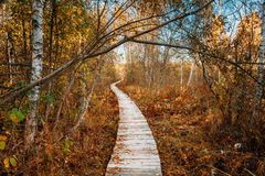 Wooden boarding path way pathway in autumn forest Stock Images