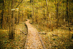 Wooden boarding path way pathway in autumn forest Royalty Free Stock Images